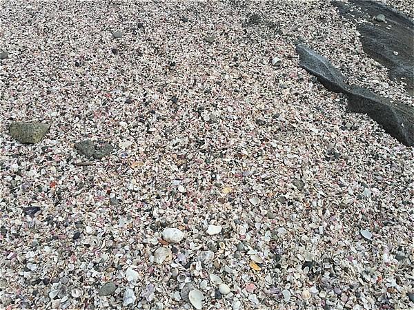 城ヶ島海岸の貝殻