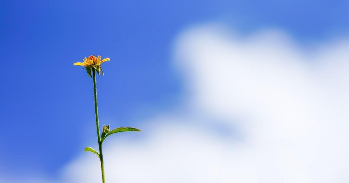 flower-1350635_1280