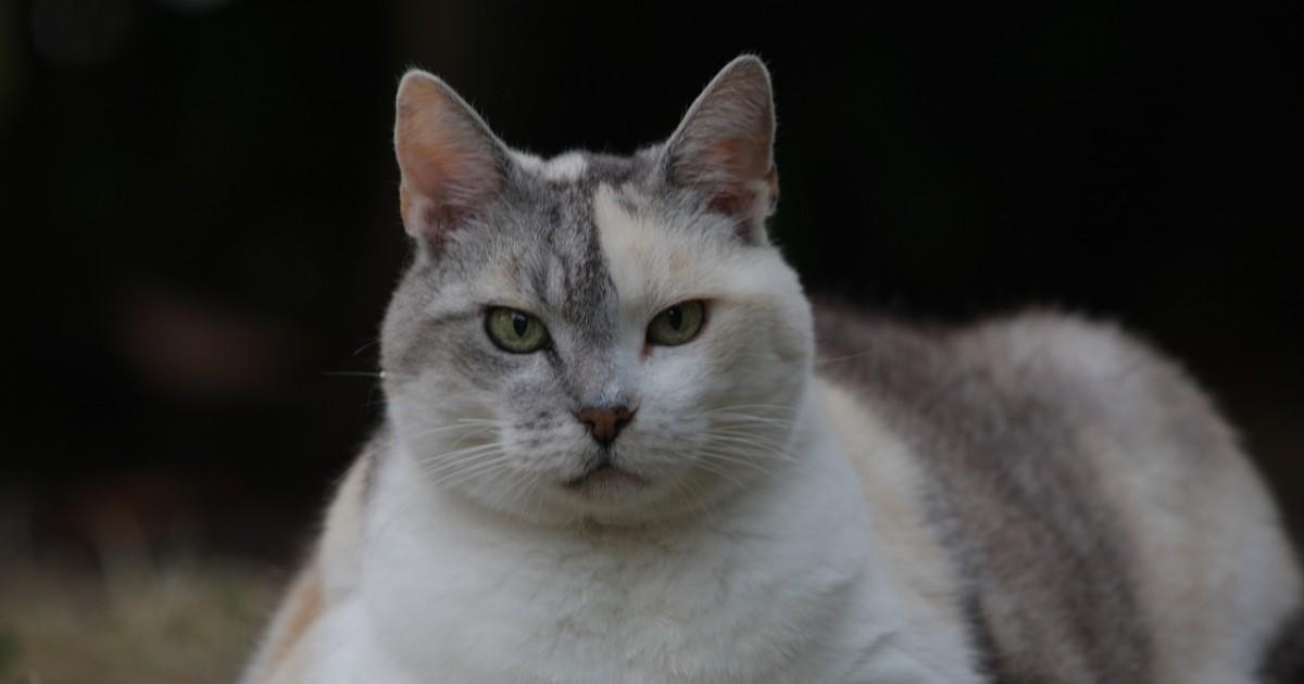 cat-1662447_1280