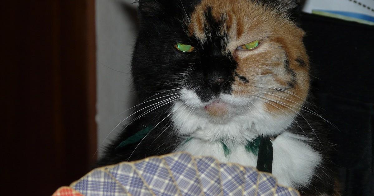 cat-55509_1280