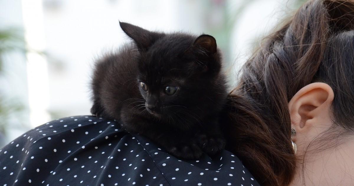 kitten-1739239_1280