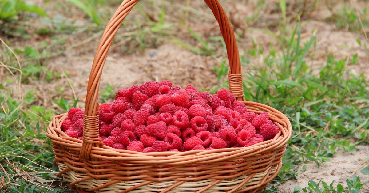 raspberry-1700512_1280