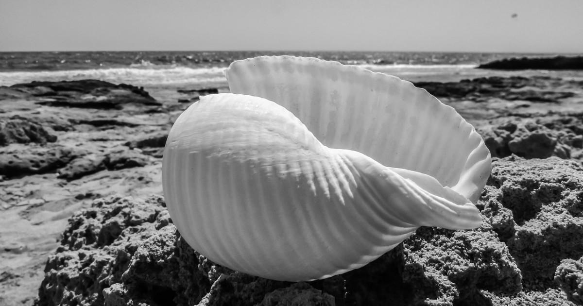seashell-1585709_1280